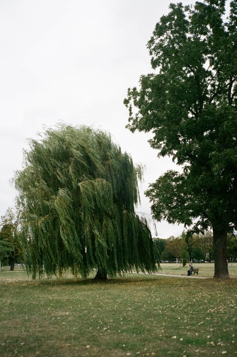 Willow is een populaire Schotse naam